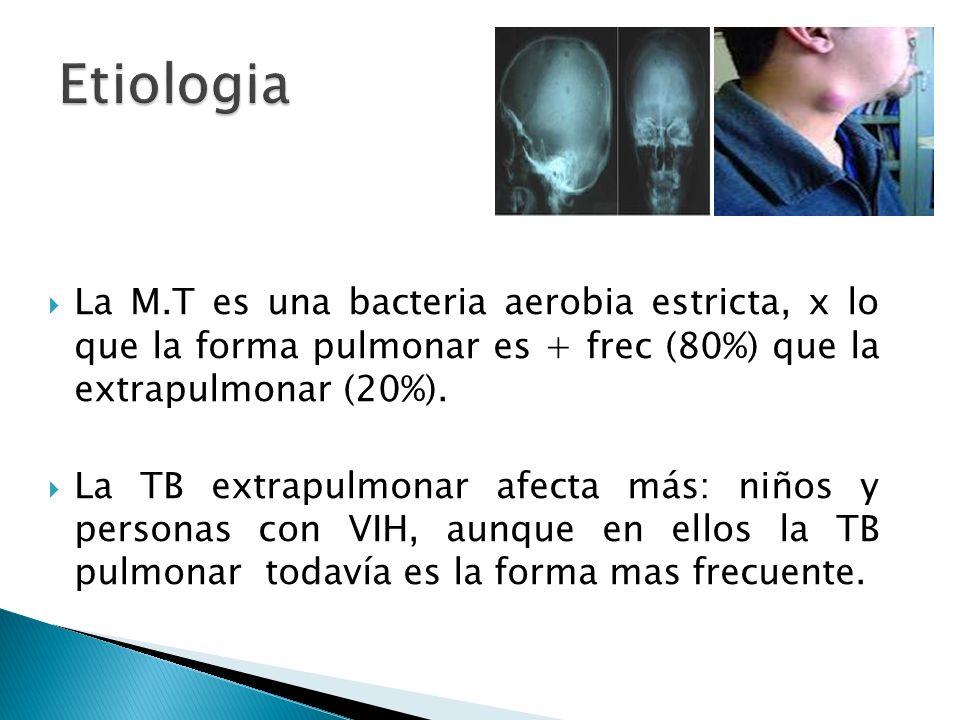 La M.T es una bacteria aerobia estricta, x lo que la forma pulmonar es + frec (80%) que la extrapulmonar (20%). La TB extrapulmonar afecta más: niños