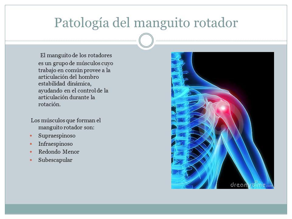 Patología del manguito rotador El manguito de los rotadores es un grupo de músculos cuyo trabajo en común provee a la articulación del hombro estabili