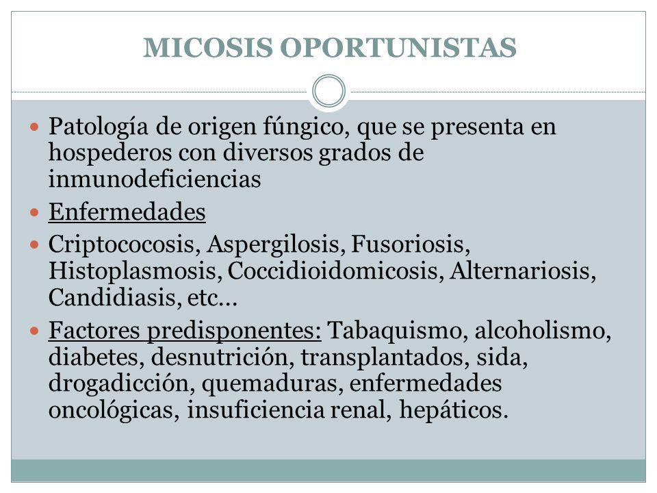 MICOSIS OPORTUNISTAS Patología de origen fúngico, que se presenta en hospederos con diversos grados de inmunodeficiencias Enfermedades Criptococosis,