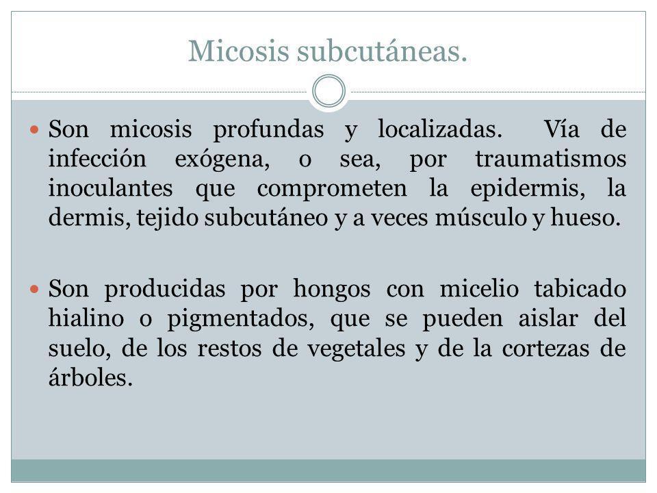 Micosis subcutáneas. Son micosis profundas y localizadas. Vía de infección exógena, o sea, por traumatismos inoculantes que comprometen la epidermis,