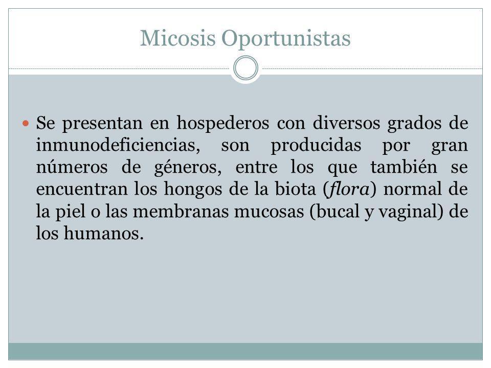 Micosis Oportunistas Se presentan en hospederos con diversos grados de inmunodeficiencias, son producidas por gran números de géneros, entre los que t