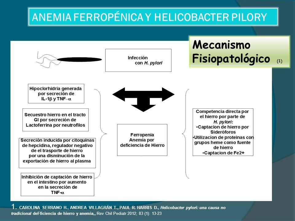 ANEMIA FERROPÉNICA Y HELICOBACTER PILORY 1.CAROLINA SERRANO H., ANDREA VILLAGRÁN T., PAUL R.