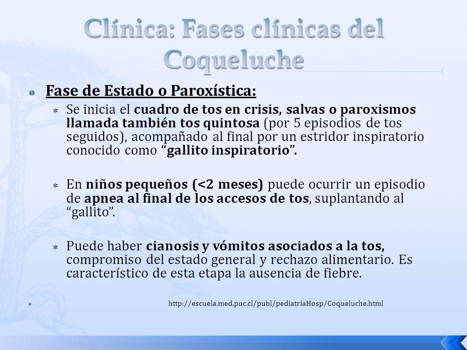 Fase de Estado o Paroxística: Se inicia el cuadro de tos en crisis, salvas o paroxismos llamada también tos quintosa (por 5 episodios de tos seguidos)