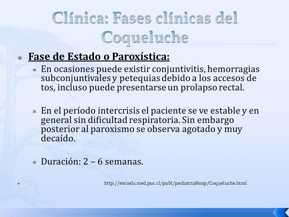 Fase de Estado o Paroxística: En ocasiones puede existir conjuntivitis, hemorragias subconjuntivales y petequias debido a los accesos de tos, incluso