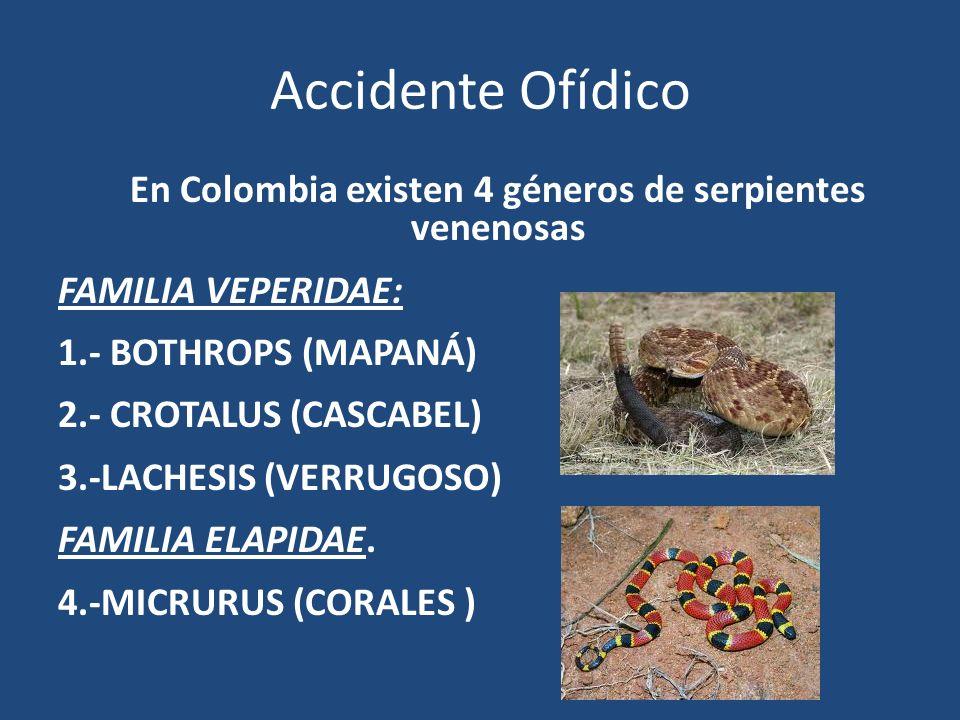 Accidente Ofídico En Colombia existen 4 géneros de serpientes venenosas FAMILIA VEPERIDAE: 1.- BOTHROPS (MAPANÁ) 2.- CROTALUS (CASCABEL) 3.-LACHESIS (