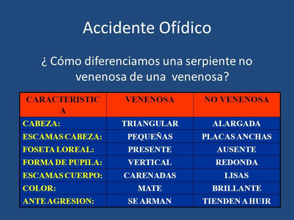 Accidente Ofídico ¿ Cómo diferenciamos una serpiente no venenosa de una venenosa? CARACTERISTIC A VENENOSANO VENENOSA CABEZA:TRIANGULARALARGADA ESCAMA