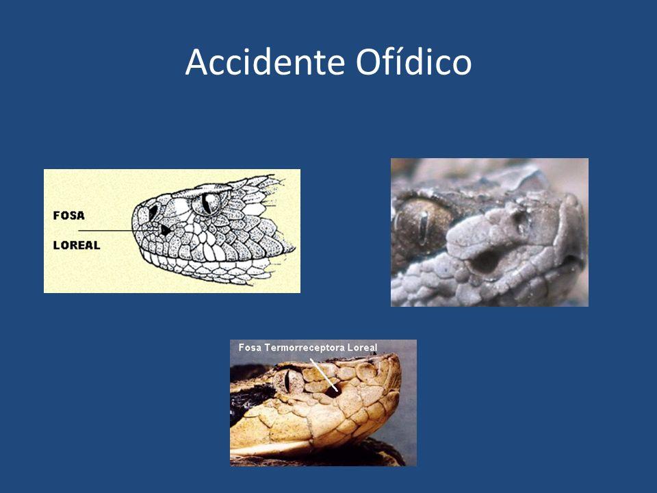 Accidente Ofídico