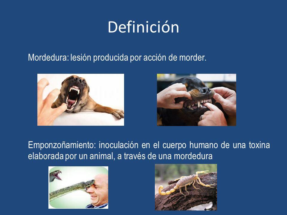 Definición Mordedura: lesión producida por acción de morder. Emponzoñamiento: inoculación en el cuerpo humano de una toxina elaborada por un animal, a