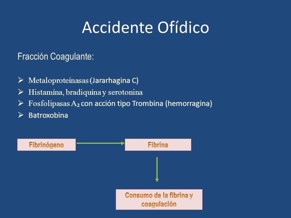 Accidente Ofídico Fracción Coagulante: Metaloproteínasas ( Jararhagina C) Histamína, bradiquína y serotonina Fosfolipasas A con acción tipo Trombina (