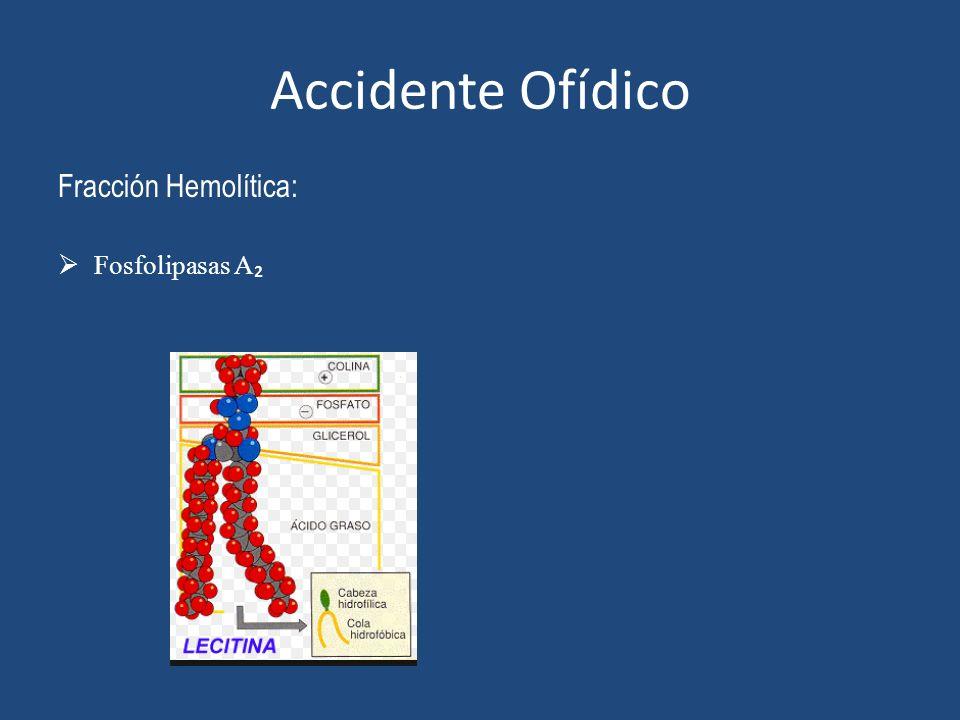 Accidente Ofídico Fracción Hemolítica: Fosfolipasas A