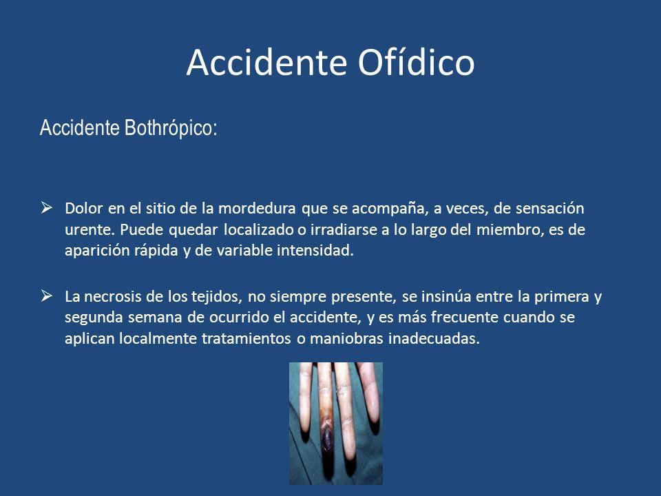 Accidente Ofídico Accidente Bothrópico: Dolor en el sitio de la mordedura que se acompaña, a veces, de sensación urente. Puede quedar localizado o irr