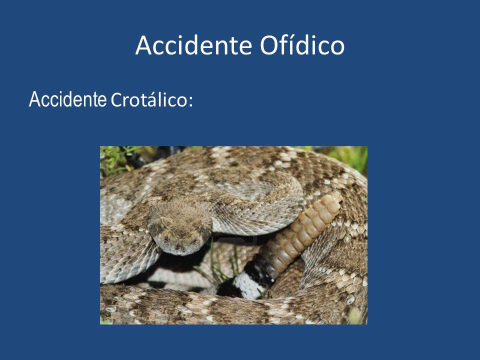 Accidente Ofídico Accidente Crotálico: