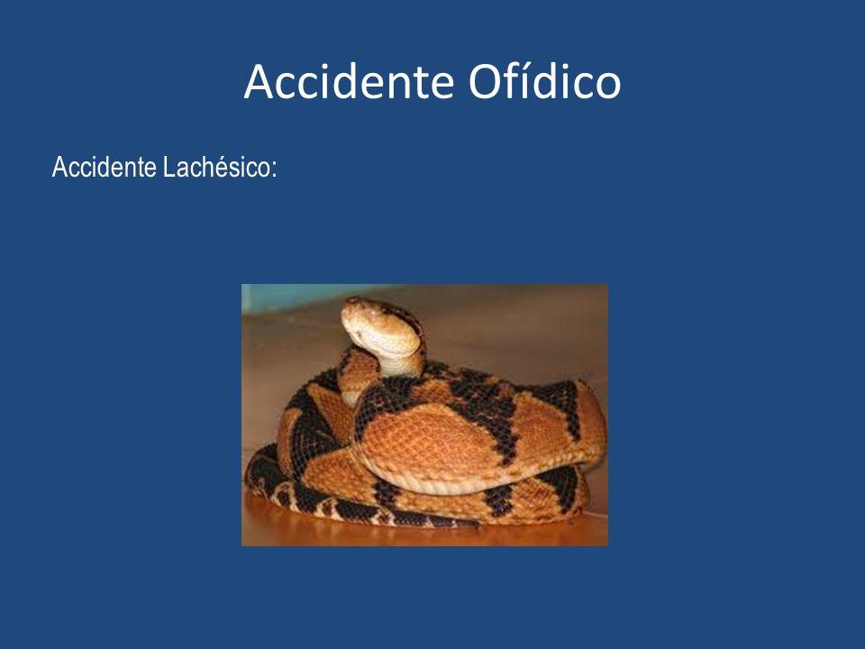 Accidente Ofídico Accidente Lachésico: