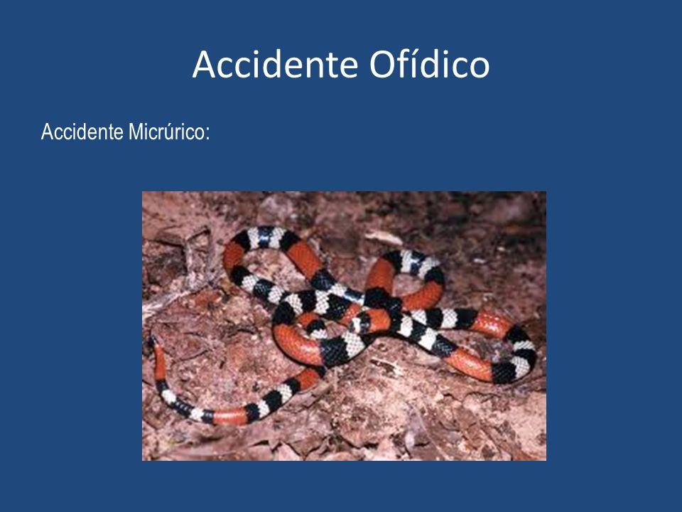 Accidente Ofídico Accidente Micrúrico: