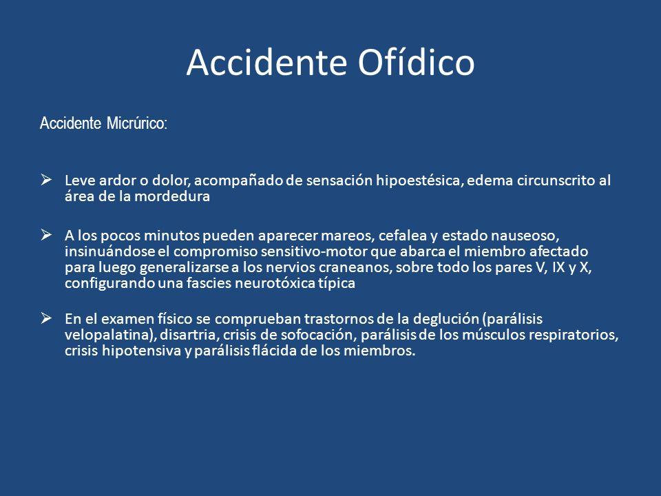 Accidente Ofídico Accidente Micrúrico: Leve ardor o dolor, acompañado de sensación hipoestésica, edema circunscrito al área de la mordedura A los poco