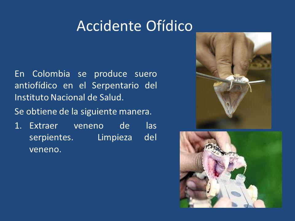 En Colombia se produce suero antiofídico en el Serpentario del Instituto Nacional de Salud. Se obtiene de la siguiente manera. 1.Extraer veneno de las