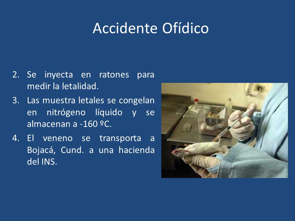 Accidente Ofídico SUERO ANTIOFÍDICO 2.Se inyecta en ratones para medir la letalidad. 3.Las muestra letales se congelan en nitrógeno líquido y se almac