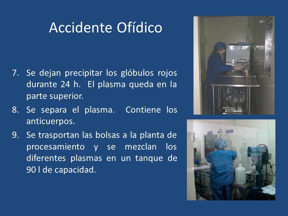 Accidente Ofídico SUERO ANTIOFÍDICO 7.Se dejan precipitar los glóbulos rojos durante 24 h. El plasma queda en la parte superior. 8.Se separa el plasma