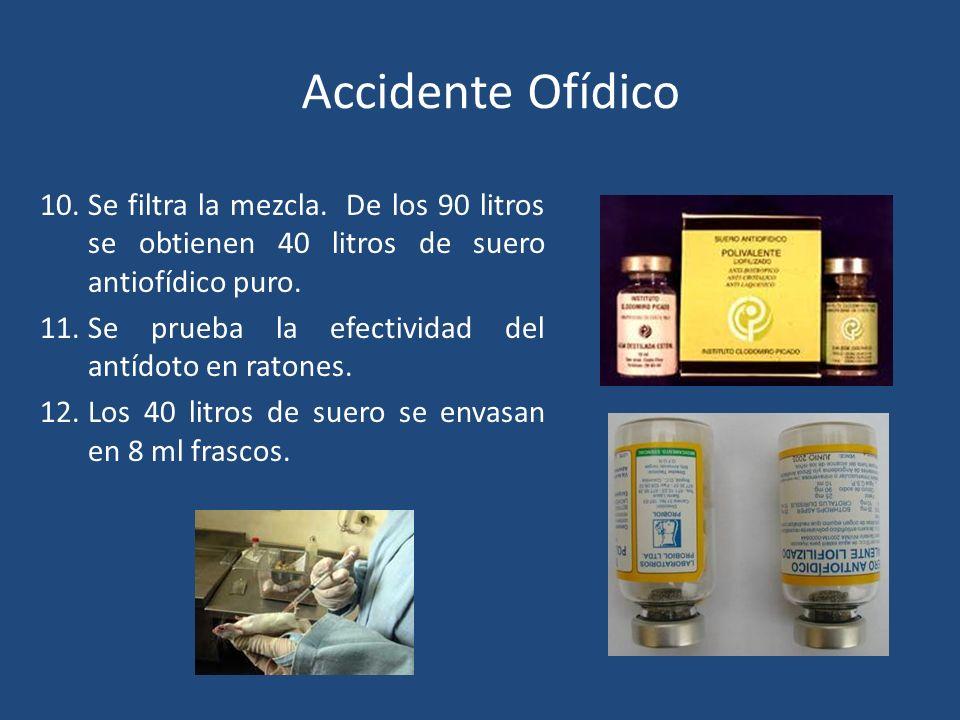 Accidente Ofídico SUERO ANTIOFÍDICO 10.Se filtra la mezcla. De los 90 litros se obtienen 40 litros de suero antiofídico puro. 11.Se prueba la efectivi