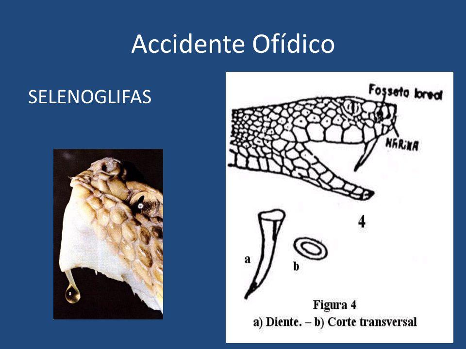 Accidente Ofídico SELENOGLIFAS