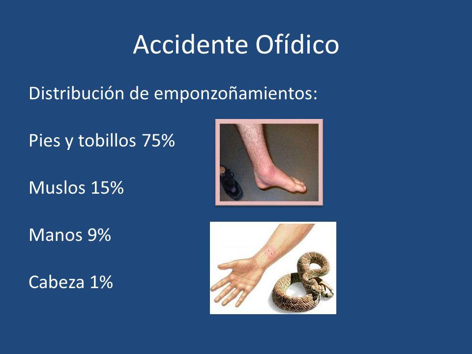 Accidente Ofídico Distribución de emponzoñamientos: Pies y tobillos 75% Muslos 15% Manos 9% Cabeza 1%