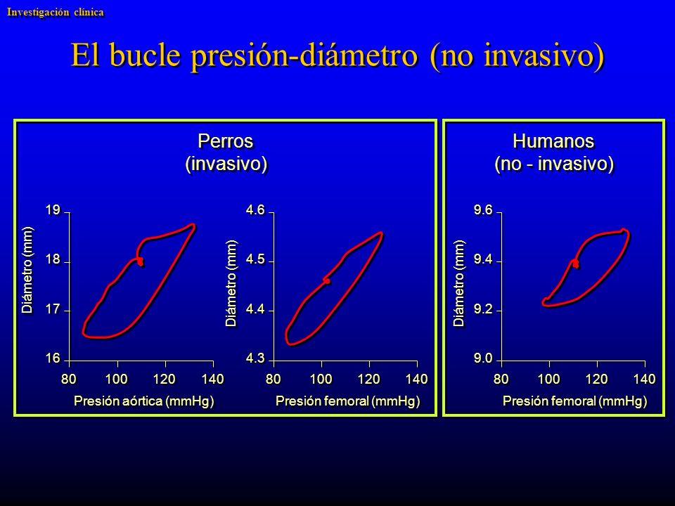 El bucle presión-diámetro (no invasivo) Perros (invasivo) Humanos (no - invasivo) Humanos (no - invasivo) Diámetro (mm) 4.6 4.5 4.4 4.3 Presión femoral (mmHg) 140 120 100 80 Diámetro (mm) 19 18 17 16 Presión aórtica (mmHg) 140 120 100 80 Diámetro (mm) 9.6 9.4 9.2 9.0 Presión femoral (mmHg) 140 120 100 80 Investigación clínica