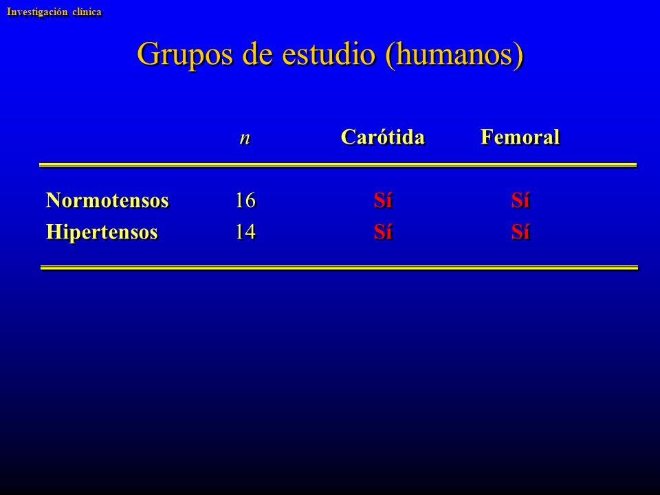 Grupos de estudio (humanos) nCarótidaFemoral Normotensos 16SíSí Hipertensos14SíSí nCarótidaFemoral Normotensos 16SíSí Hipertensos14SíSí Investigación clínica