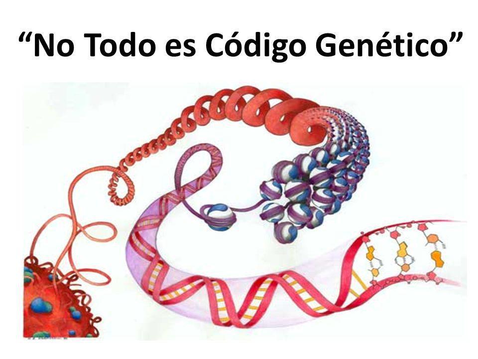 No Todo es Código Genético