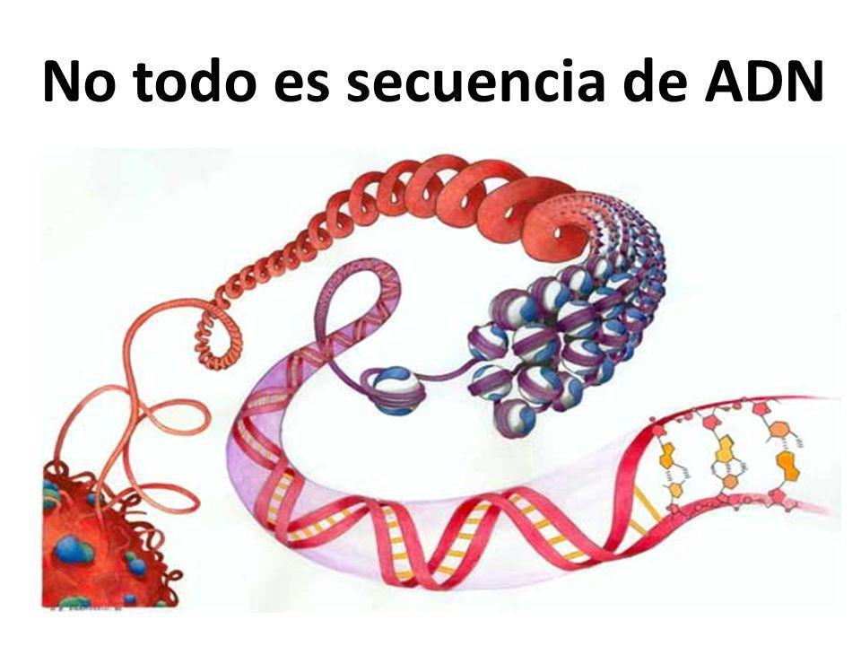 No todo es secuencia de ADN