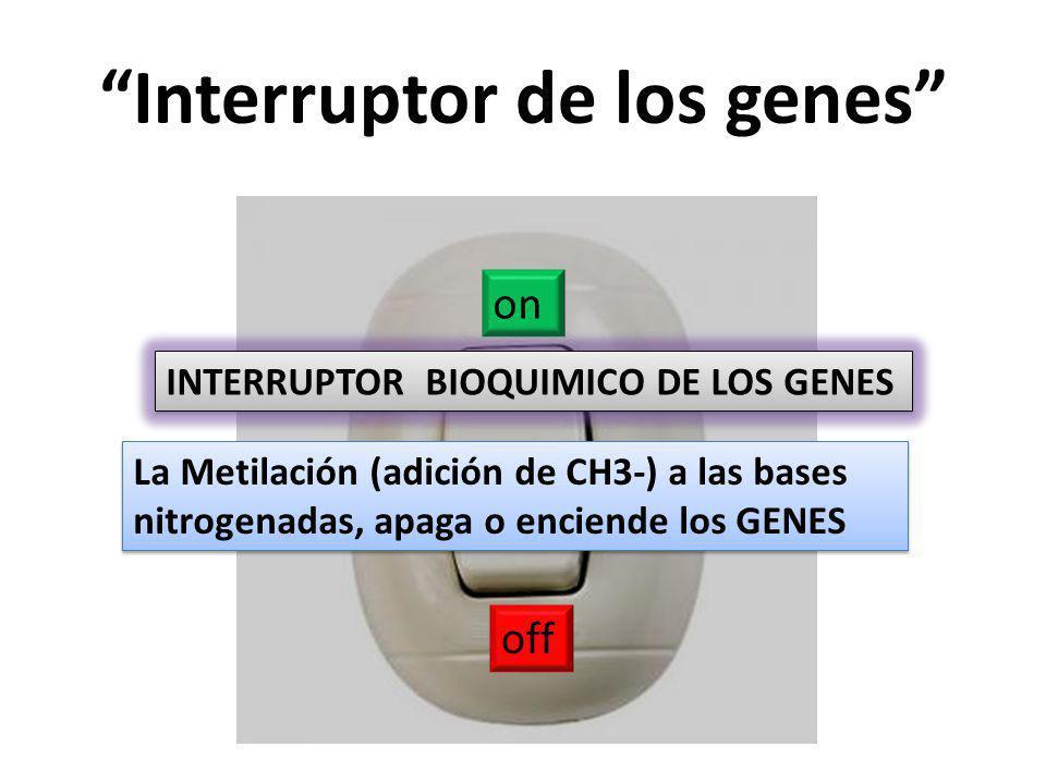 Interruptor de los genes on off INTERRUPTOR BIOQUIMICO DE LOS GENES La Metilación (adición de CH3-) a las bases nitrogenadas, apaga o enciende los GENES
