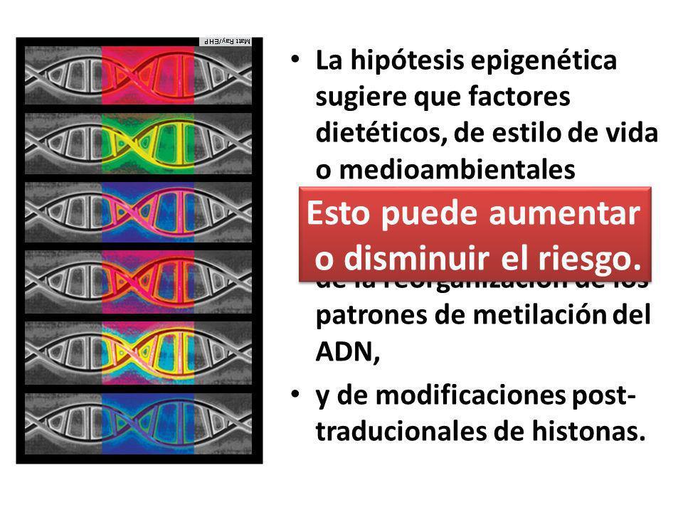 La hipótesis epigenética sugiere que factores dietéticos, de estilo de vida o medioambientales inducen cambios transcripcionales a través de la reorganización de los patrones de metilación del ADN, y de modificaciones post- traducionales de histonas.