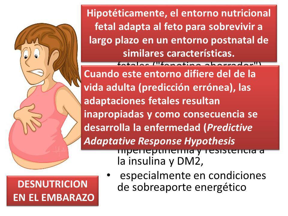 La malnutrición materna durante la gestación desencadena una serie de adaptaciones metabólicas fetales ( fenotipo ahorrador ) que en la edad adulta aumentan el riesgo de desarrollar enfermedades cardiovasculares hipertensión arterial, obesidad, hiperinsulinemia e hiperleptinemia y resistencia a la insulina y DM2, especialmente en condiciones de sobreaporte energético DESNUTRICION EN EL EMBARAZO DESNUTRICION EN EL EMBARAZO Hipotéticamente, el entorno nutricional fetal adapta al feto para sobrevivir a largo plazo en un entorno postnatal de similares características.