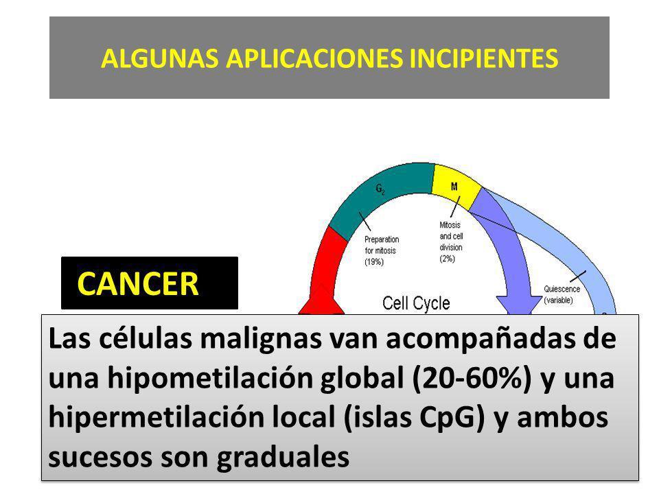 ALGUNAS APLICACIONES INCIPIENTES CANCER Las células malignas van acompañadas de una hipometilación global (20-60%) y una hipermetilación local (islas CpG) y ambos sucesos son graduales