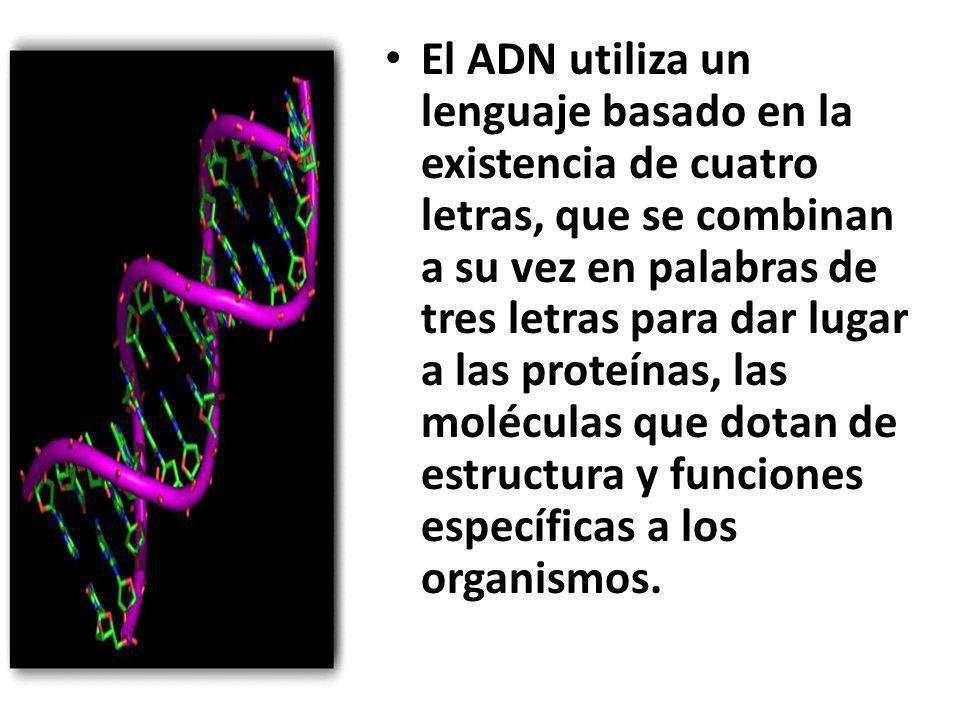 Preguntas que no resuelve el conocer el Genoma Humano ¿ Cómo explicar que aunque dos personas tengan la misma mutación genética una desarrolle una enfermedad y la otra no?.