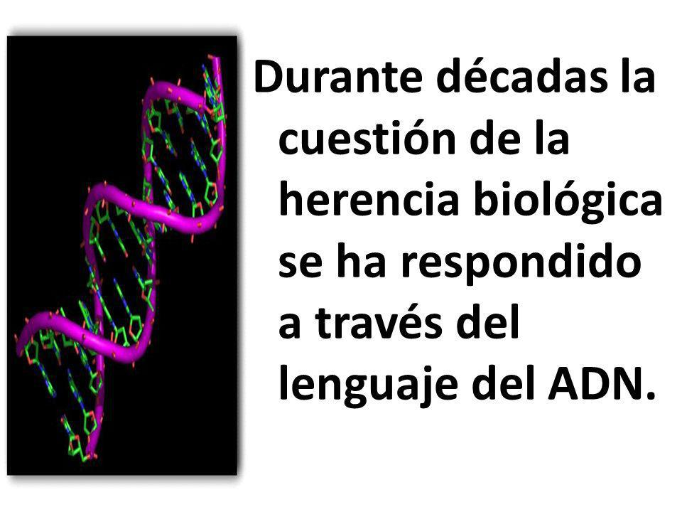 Esta visión situaba al ADN como único material hereditario que determina los rasgos que diferencian un organismo de otro y que se transmite de generación en generación.