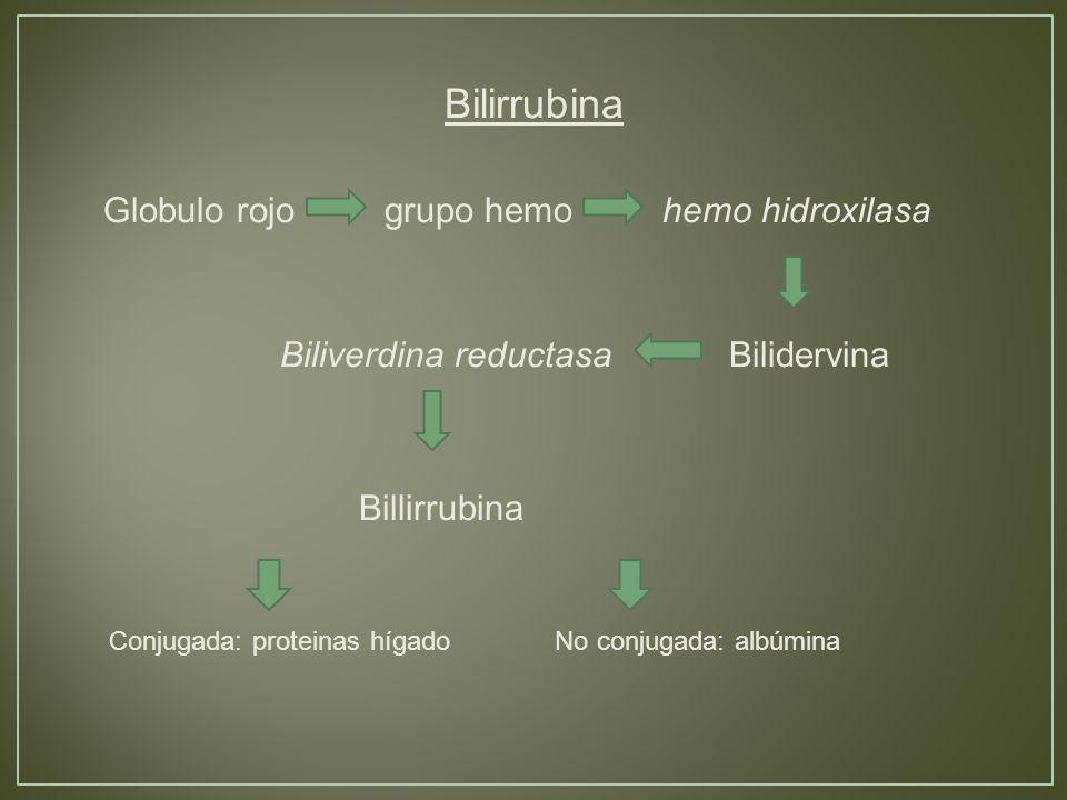 Bilirrubina Globulo rojo grupo hemo hemo hidroxilasa Biliverdina reductasa Bilidervina Billirrubina Conjugada: proteinas hígado No conjugada: albúmina