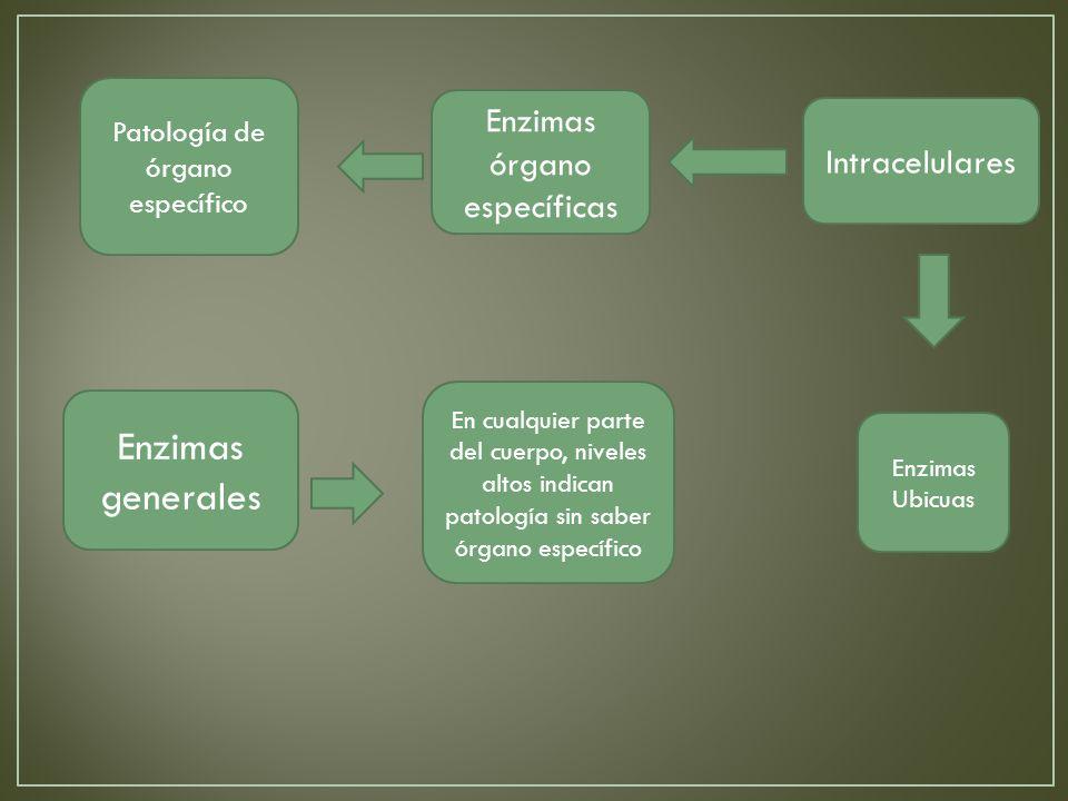 Enzimas órgano específicas Patología de órgano específico Enzimas generales Intracelulares En cualquier parte del cuerpo, niveles altos indican patología sin saber órgano específico Enzimas Ubicuas