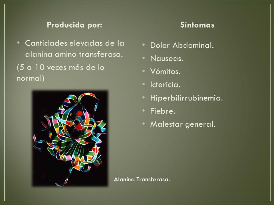 Producida por: Cantidades elevadas de la alanina amino transferasa.