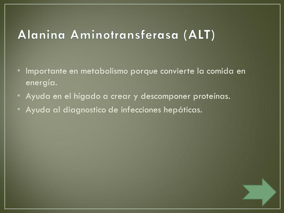 Importante en metabolismo porque convierte la comida en energía.