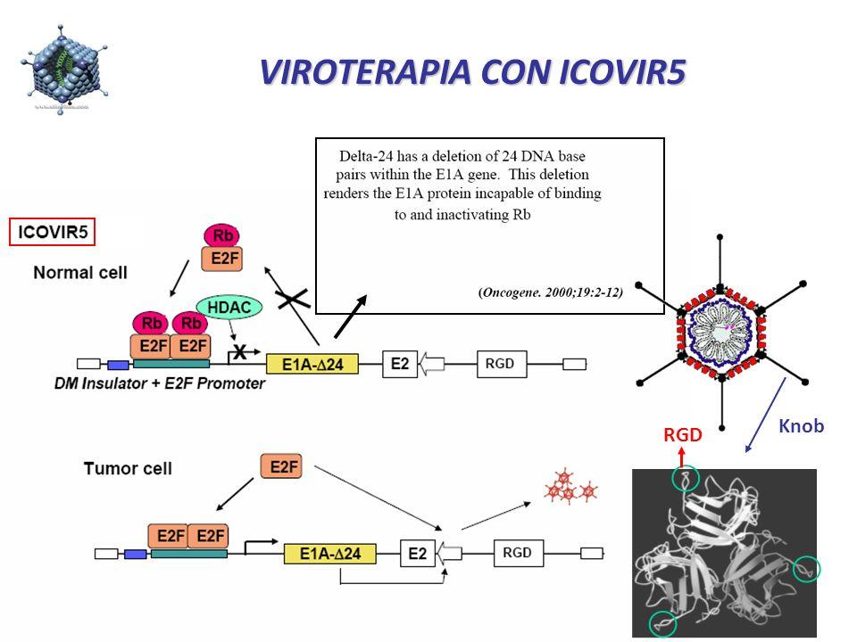VIROTERAPIA CON ICOVIR5 Knob RGD