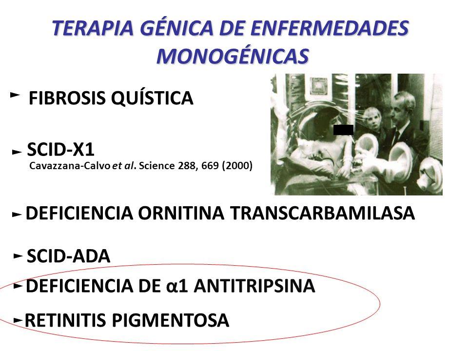 TERAPIA GÉNICA DE ENFERMEDADES MONOGÉNICAS Corrección de SERPINA1Corrección de SERPINA1 deficiencia de α1-antitripsina Corrección génica a nivel de células madre: iPSCs a partir de fibroblastos autólogos corrección defecto genético en las iPSCs diferenciación a hepatocitos introducción de los hepatocitos corregidos genéticamente * Seguridad y efectividad: mínima posibilidad de rechazo o reacción a las iPSCs autólogas.
