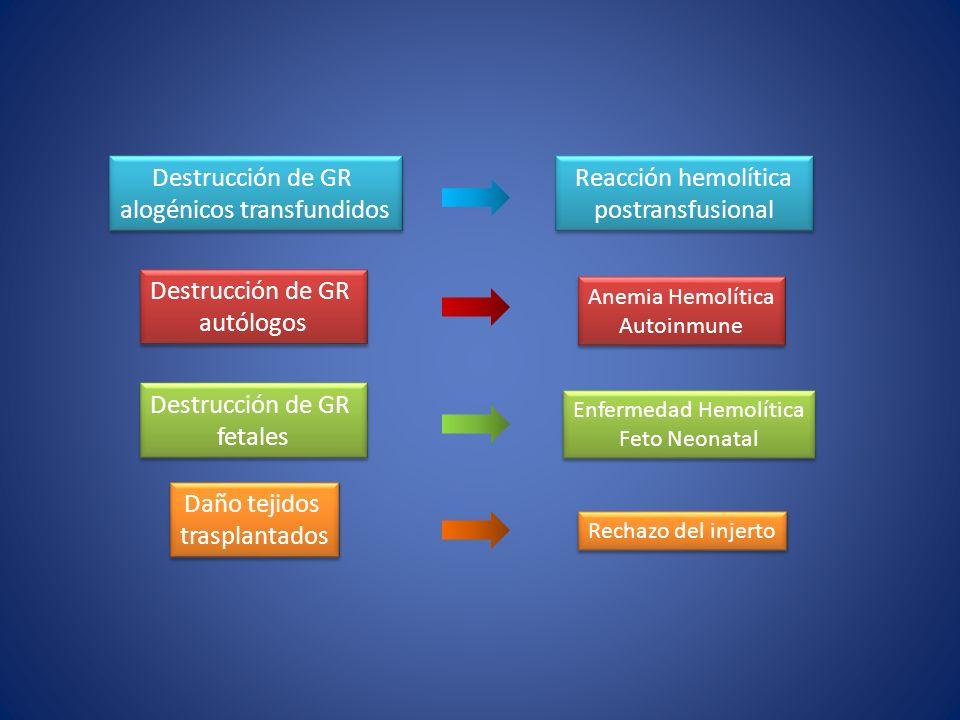 Reacción hemolítica postransfusional Destrucción de GR alogénicos transfundidos Destrucción de GR alogénicos transfundidos Destrucción de GR autólogos