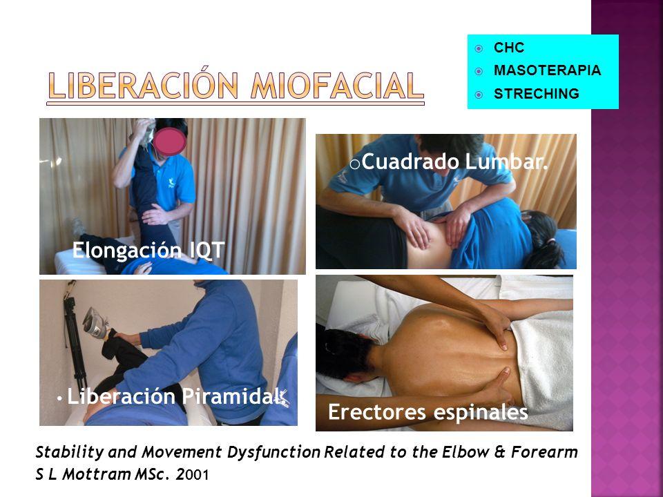 o Cuadrado Lumbar. Liberación Piramidal. Stability and Movement Dysfunction Related to the Elbow & Forearm S L Mottram MSc. 2 001 Erectores espinales