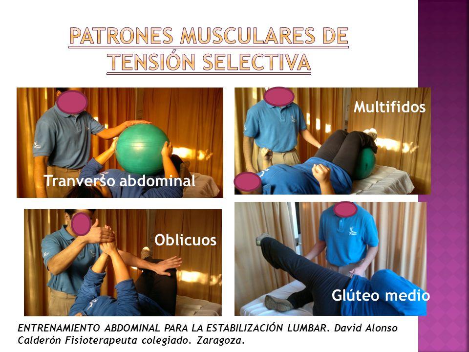 Tranverso abdominal Multifidos Oblicuos Glúteo medio ENTRENAMIENTO ABDOMINAL PARA LA ESTABILIZACIÓN LUMBAR. David Alonso Calderón Fisioterapeuta coleg