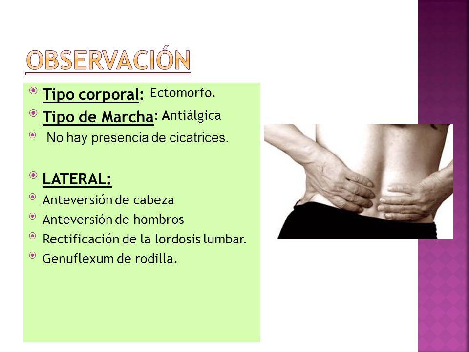 Tranverso abdominal Multifidos Oblicuos Glúteo medio ENTRENAMIENTO ABDOMINAL PARA LA ESTABILIZACIÓN LUMBAR.
