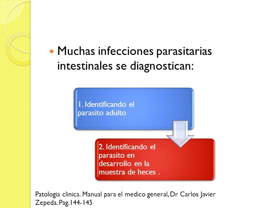 Muchas infecciones parasitarias intestinales se diagnostican: 1. Identificando el parasito adulto 2. Identificando el parasito en desarrollo en la mue