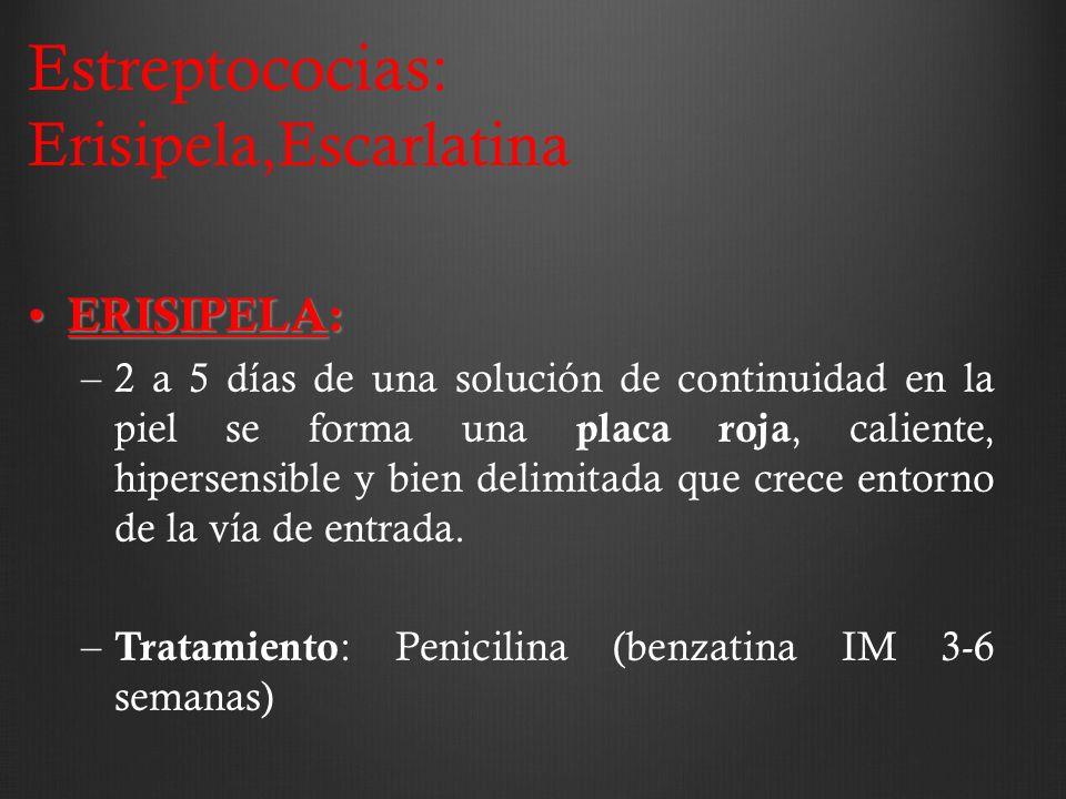 Estreptococias: Erisipela,Escarlatina ERISIPELA: ERISIPELA: –2 a 5 días de una solución de continuidad en la piel se forma una placa roja, caliente, h