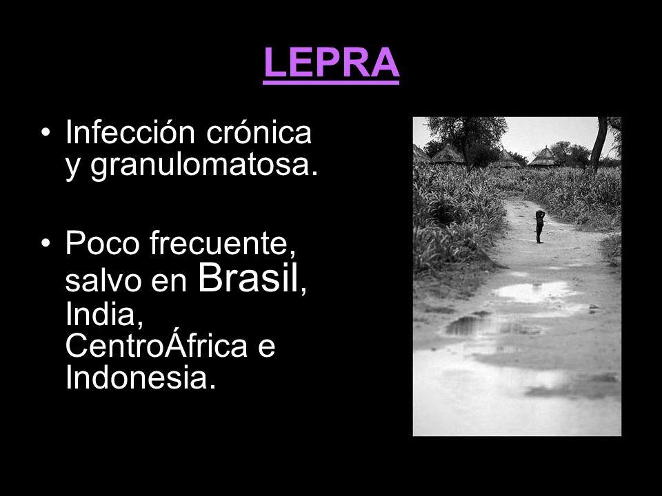 LEPRA Infección crónica y granulomatosa. Poco frecuente, salvo en Brasil, India, CentroÁfrica e Indonesia. ibtroucción