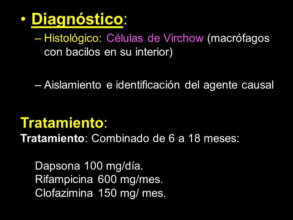 Diagnóstico: –Histológico: Células de Virchow (macrófagos con bacilos en su interior) –Aislamiento e identificación del agente causal Tratamiento: Tra