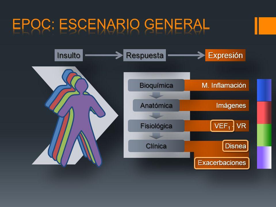M. Inflamación ImágenesImágenes VEF 1 - VR RespuestaRespuestaExpresiónExpresión BioquímicaBioquímica AnatómicaAnatómica FisiológicaFisiológica Clínica